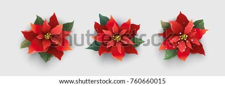 Red Christmas poinsettia flower isolated on white background. Vector Illustration.
