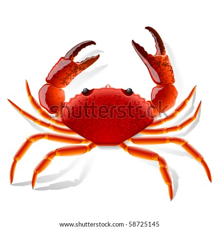Red crab. Vector illustration.