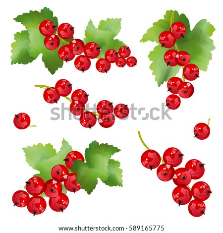 red currant berries set of