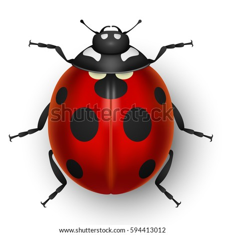 red cute ladybug isolated on
