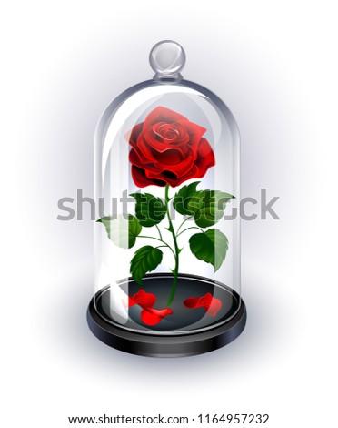 red  eternal rose under