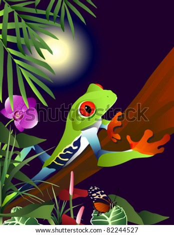 Red Eyed Tree Frog in the jungle.