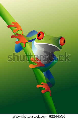 red eyed tree frog on vine