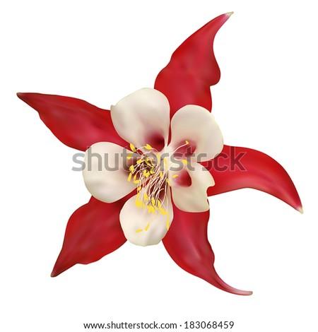 Red Flower. Vector illustration