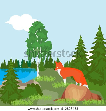 red fox in the north woods  in