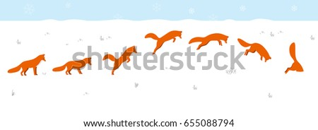 red fox jumping and hunting on