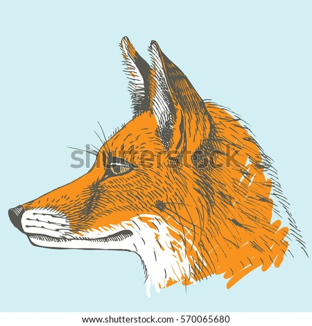 red fox portrait in profile