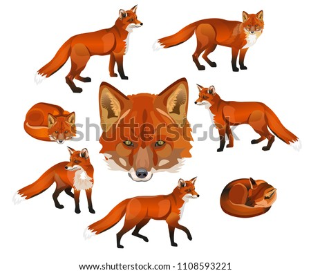 Red fox set. Vector illustration isolated on white background