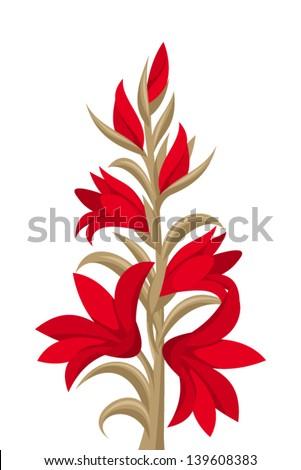 red gladiolus flowers vector