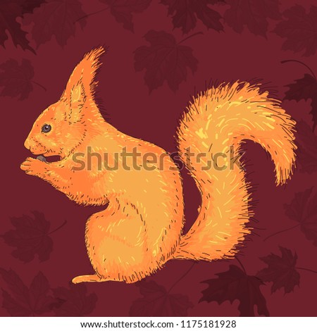 red haired squirrel on a dark