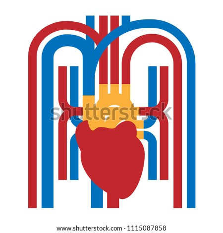 Red human heart, blood vessels, veins. Simple flat vector individual elements of the circulatory system in three colors.