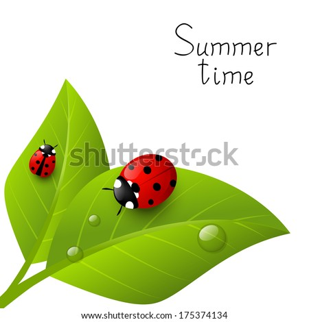 red ladybugs on green leaves