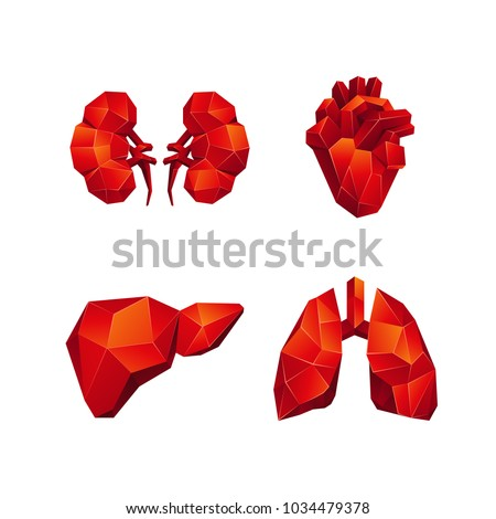 Red low poly human internal organs set on a black background. Abstract anatomy organ, such as the heart, lungs, liver and kidneys in 3D polygon style.