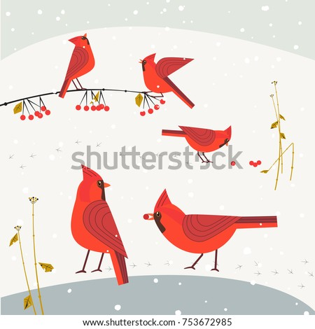 red northern cardinal birds on