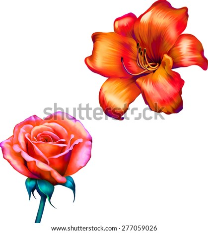 red orange lily and red mona