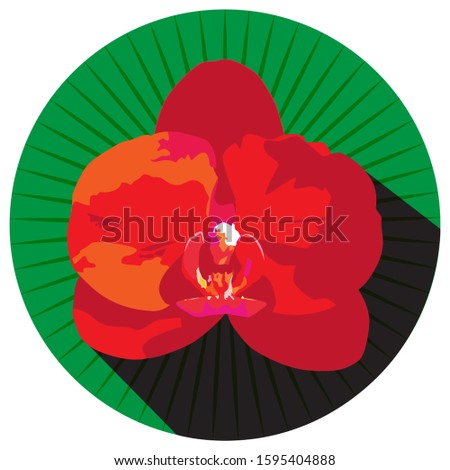 red orchid flower in a green