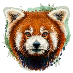 Red Panda. Graphic, color, hand-drawn portrait of a Red Panda on a white background in watercolor style.