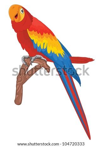 Red parrot bird vector illustration