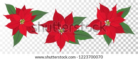 red poinsettia vector flowers
