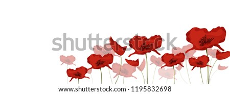 Red Poppies Banner Background For Remembrance Day. 11th Of Nov.