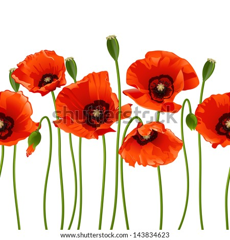 Red poppies in a row. Isolated on white background. Vector illustration
