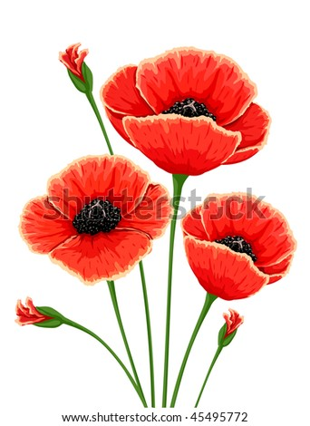 Picturepoppy Flower on Red Poppy Flowers   Vector Illustration   45495772   Shutterstock