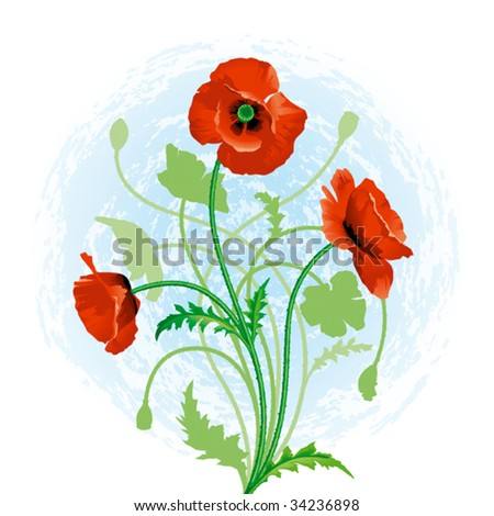Red poppy. Vector - stock vector