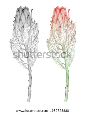 red protea flower exotic
