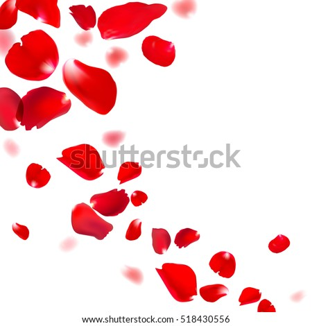 red rose falling petals against