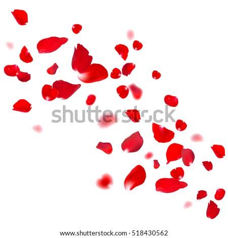 red rose falling petals against