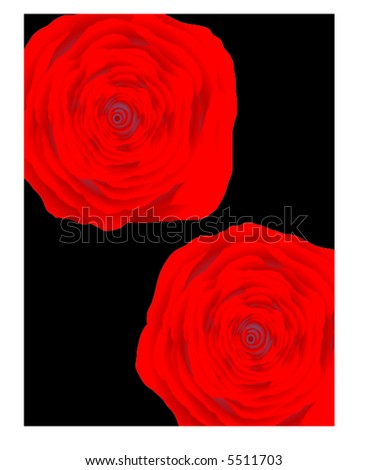 Rose Flower Background. red rose flower background.