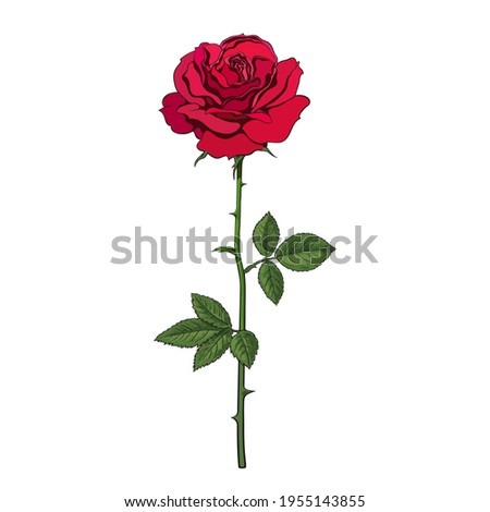 Red rose flower with leaves and stem. Vector illustration isolated on white background. Decorative element for tattoo, greeting card, wedding invitation,
