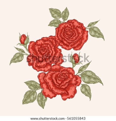 red rose flowers and leaves in