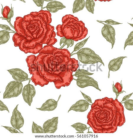 red rose flowers  buds and