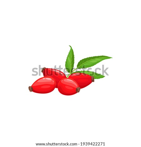 Red rose hip rosehip, green leaves isolated realistic food dessert. Vector rosehip or hep haw harvest, ripe fruits, farm garden, wild forest food. Jam, yogurt or juice package label, natural dessert Stock photo ©