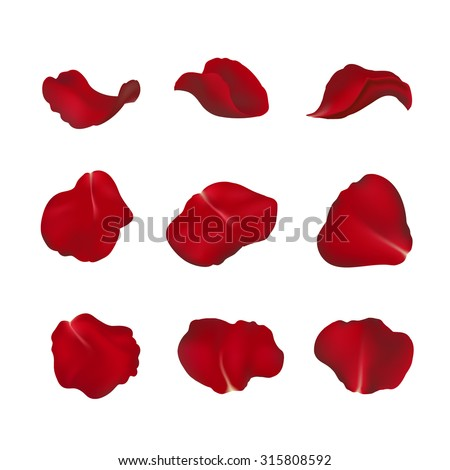 red rose petals isolated on