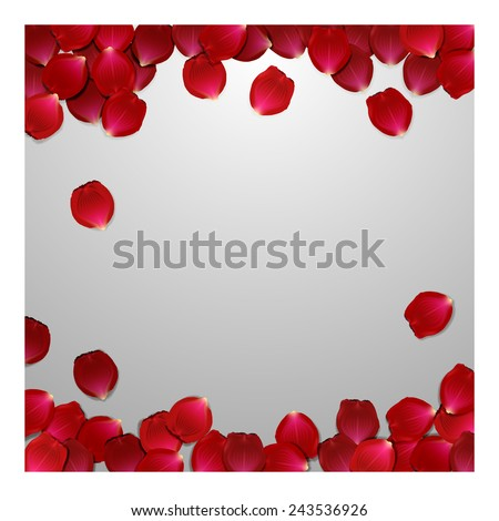 red rose petals  valentine s