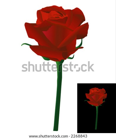 Red rose - vector.