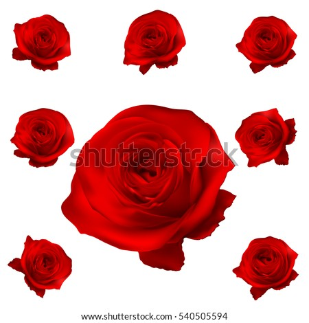 red roses set isolated on white