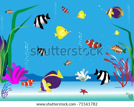 Red sea fishes