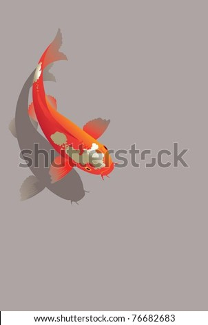 red spotted carp the vector