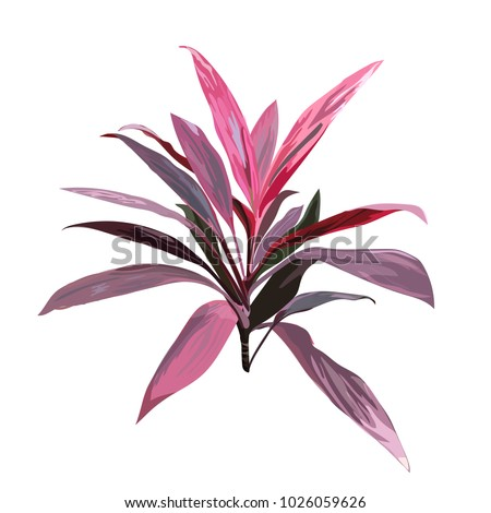 red tropical plant cordyline