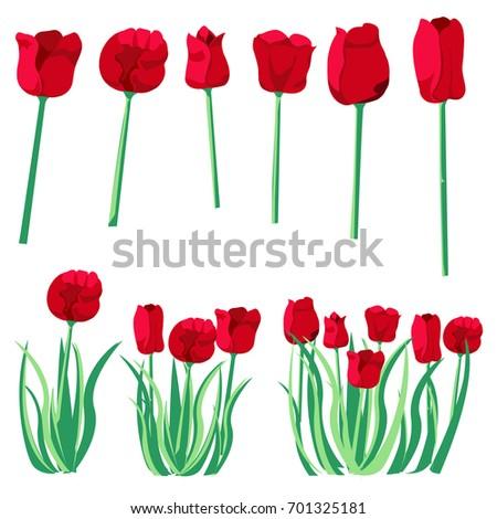 red tulip design 6 red flower