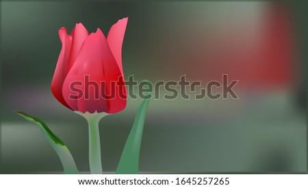 red tuliprealistic red tulip
