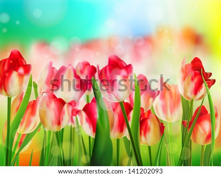 red tulips field  shallow dof