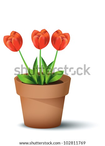 Red tulips in flower pot, illustration