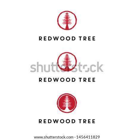 redwood tree logo design vector