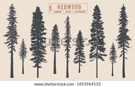 Redwood tree silhouette vector illustration hand drawn