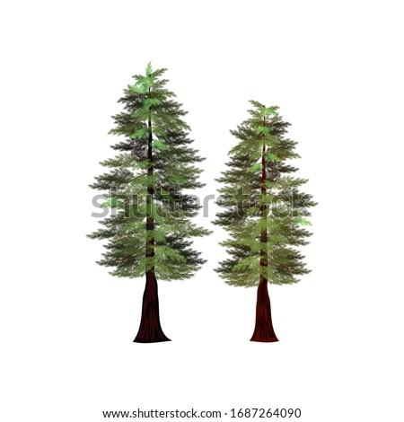 redwood tree  the tallest trees