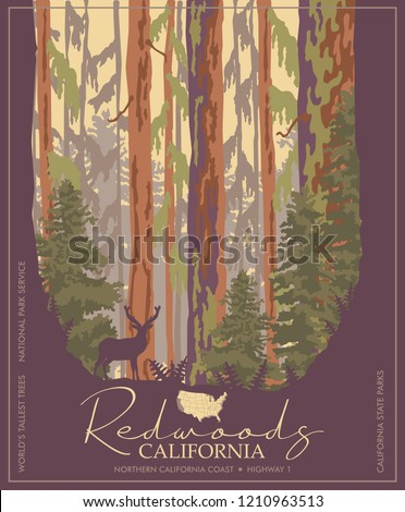 redwoods park in california